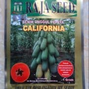 pepaya california raja seed