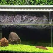 Seed Mini Dwarf Aquascape
