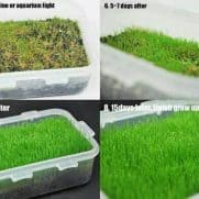 Grass Seed Small Leaf Aquascape